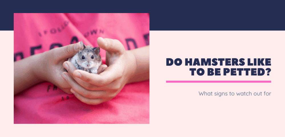 white and gray hamster being petted by young girl in a bright pink shirt