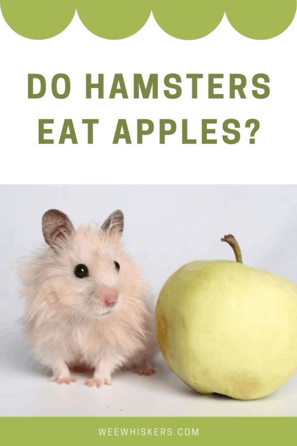 tan hamster next to a green apple in front of a white background