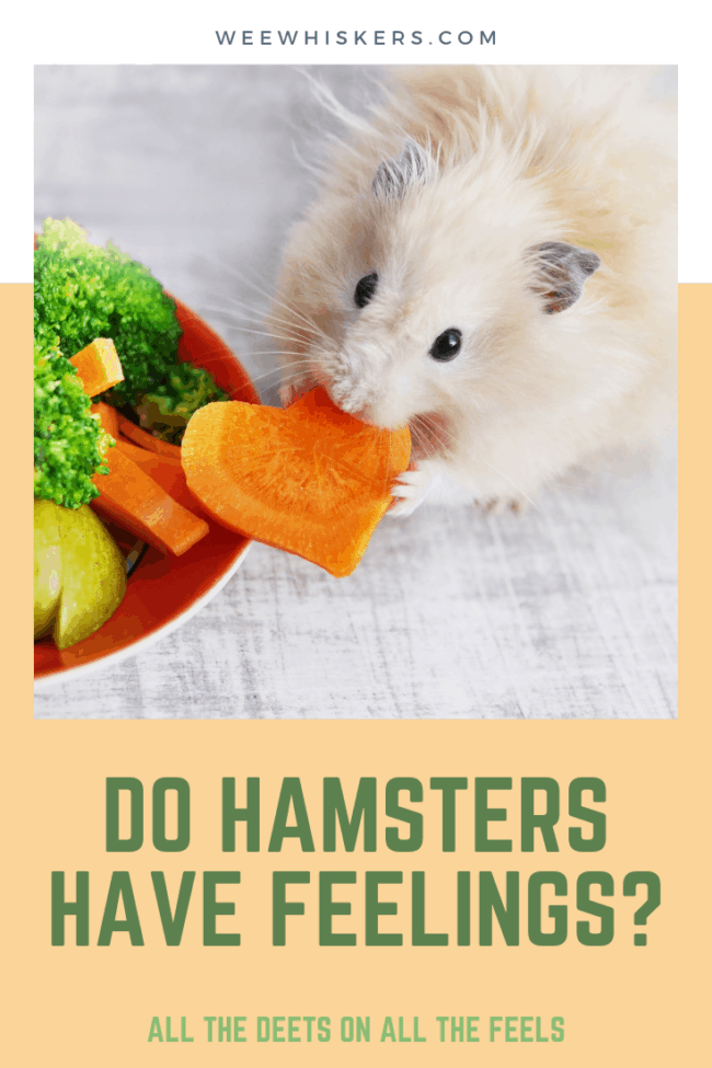 light tan hamster eating a heart shaped carrot