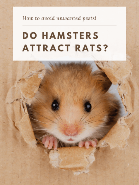 adorable hamster popping out of cardboard box